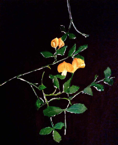 painting of Medicago Truncatula